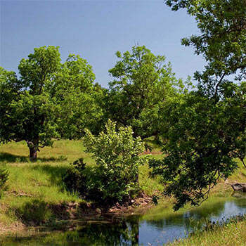 Sabinas Creek Ranch, Texas Hill Country Land